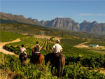 On horseback in the Cape Winelands